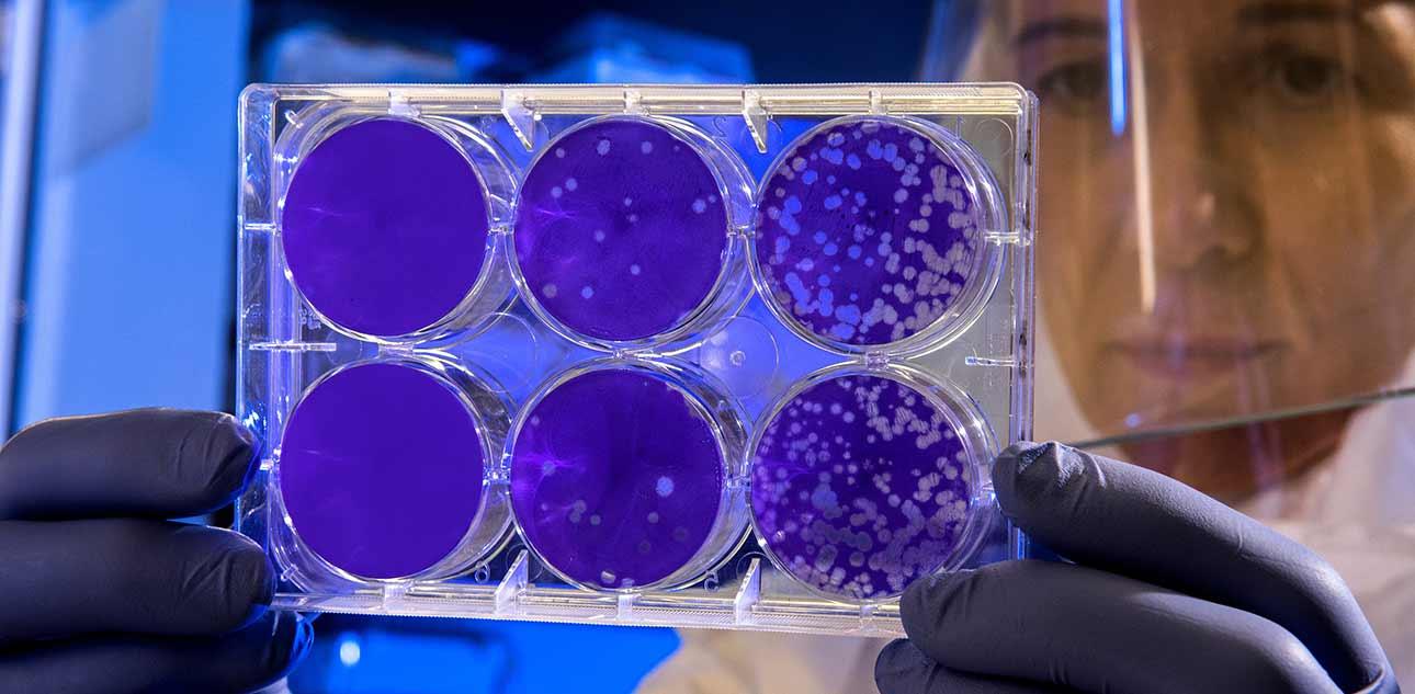 Google Sta Costruendo un Sito sul Coronavirus